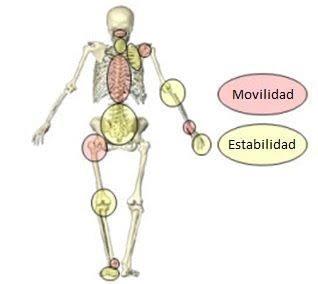 Movilidad vs estabilidad